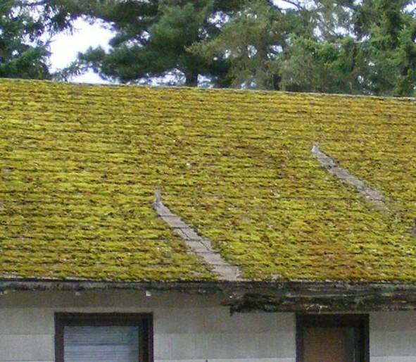 lichen on roofs how to clean