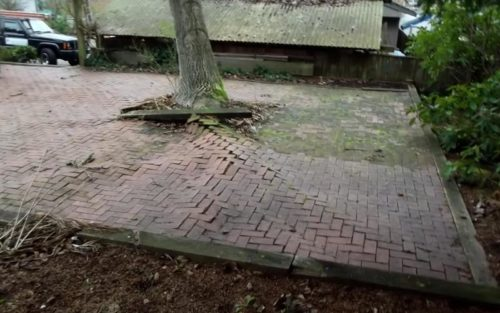 Patio destroyed bu tree roots