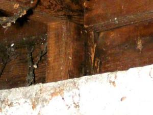 Anobiid Beetle Damage