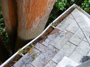 Tree crushing the gutter