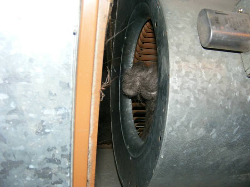 Furnace filter sucked into blower