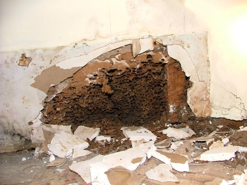 Moisture Ant Carton
