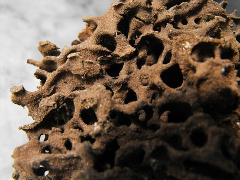 Moisture Ant nesting materials/carton