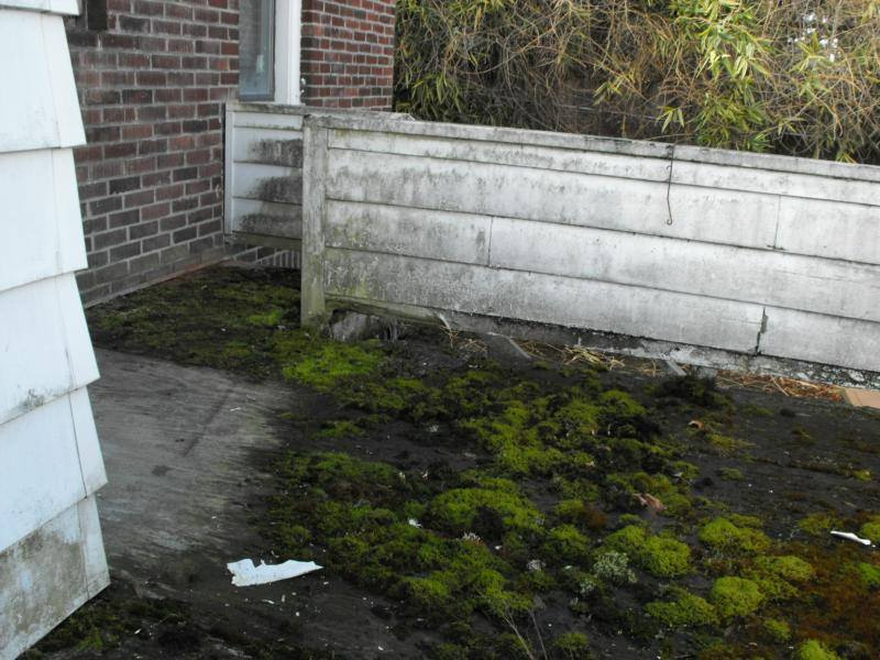 Moss covered deck