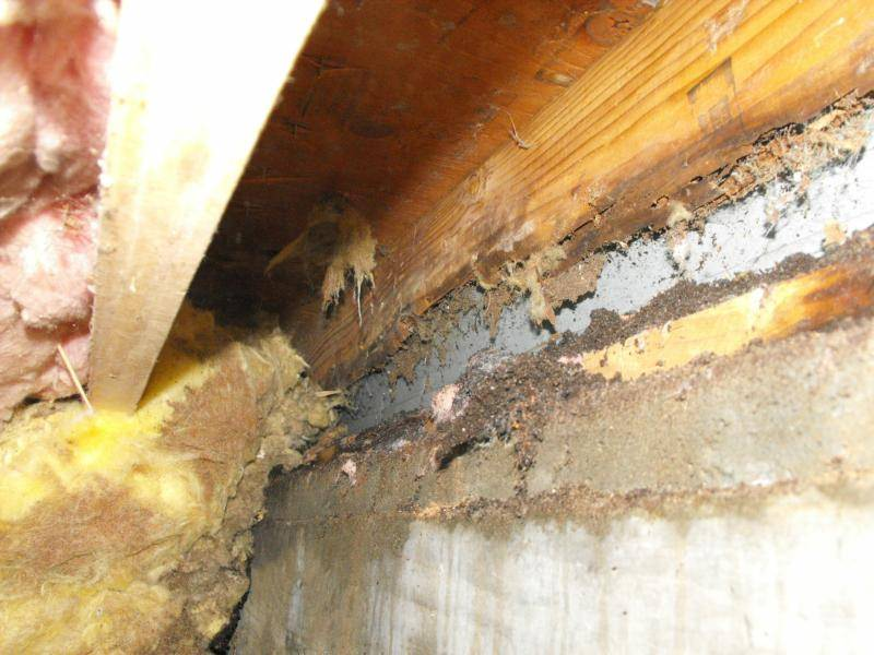 The vinyl siding shows on the inside of the crawl space as well