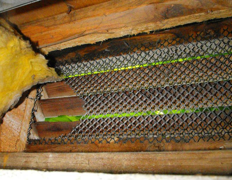 Rats will eat through wire mesh