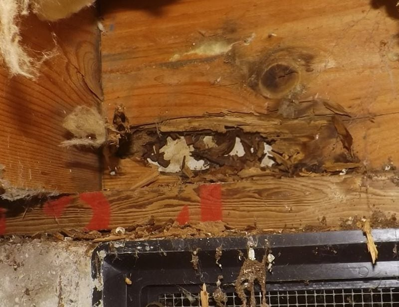 Rim joist damaged by wood destroying insects and wood decay/rot