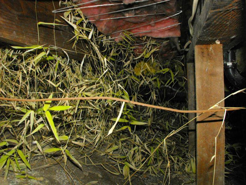 vegetation in a crawl space