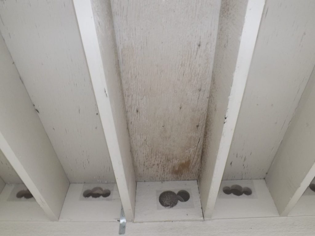 Bathroom exhaust fan terminated at screened hole in bird-blocking