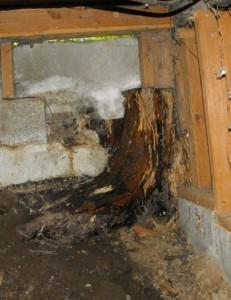 Stump foundation