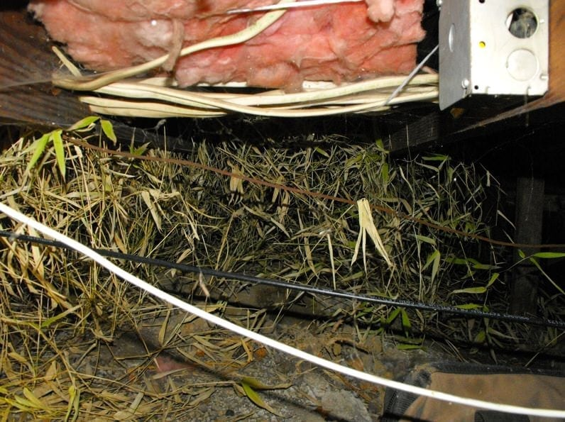 Crawl space filled with bamboo