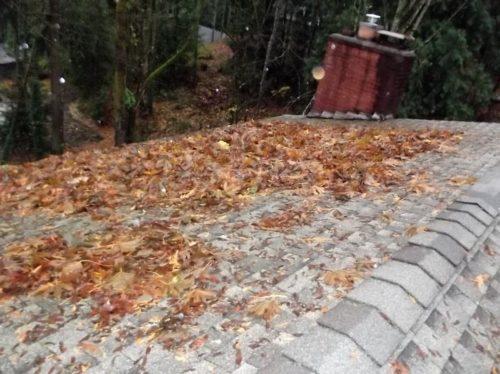 Extensive debris on roof