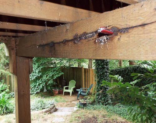 Pressure treated wood beam with fungal growth