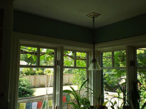 Grape arbor sun protection